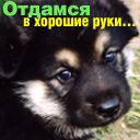 Ветеринарный врач 067--730-57-37
