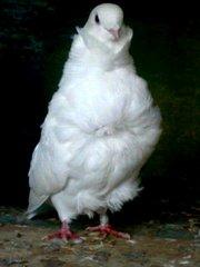 голубей