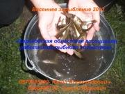Весеннее зарыбление водоемов 2013