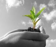 Средства Защиты Растений (СЗР) от мировых производителей