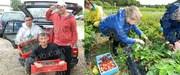 Работа на ферме в Финляндии. Сбор клубники,  малины и овощей.