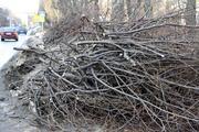 вывоз хлама,  листвы,  сухих деревьев,  веток,  сорняков в Харькове