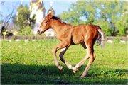 Прокат свадебных пони и лошадей