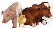 Закупка ! крупно-рогатый скот, кони, свини