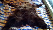 Продам Шкура медвежья