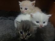 Котята ищут  себе добрых хозяев