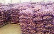 Картофель оптом со склада,  от производителя.