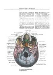 атлас анатомии человека Синельникова