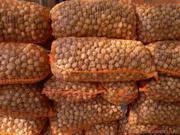Куплю грецкий орех на экспорт в количестве от 20 тонн.