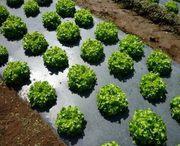 Пленка для мульчирования почвы от производителя в Харькове.