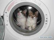 Ремонт (стиральных машин )автомат