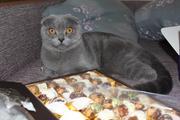 Шикарные крупные котята ищут шикарных хозяев!