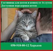 Услуги гостиница для котов и кошек от 1х суток