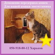 Домашняя передержка кошек для вашей кошки,  зоогостиница