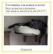 Гостиница для кошек цена доступная
