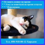 Гостиница для котов и кошек от 1х суток