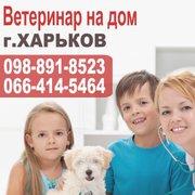 Ветеринар на дoм Харьков