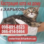 Кастрация кота на дому. Харьков - 550 грн.
