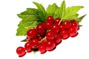 Куплю ягоди порічки,  ожини,  смородини гуртом