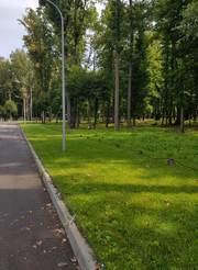 Участок под жилую застройку в лесу,  Лесопарк,  Харьков.