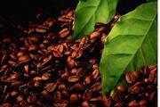 Купить Экстракт черного кофе