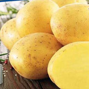 Семенная картошка Картопля ОРЛА Электра Ривьера Торнадо Кристина РОКО