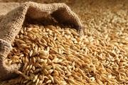 Зерносмеси,  зерноотходы,  зерновые куплю