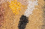 Пшениця,  кукурудза,  соя,  соняшник. Закупівля