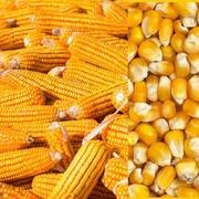 Куплю зерновые по всей  Украине