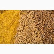 Куплю відходи кукурудзи,  пшениці,  сої,  соняшнику,  ячменю,  проса
